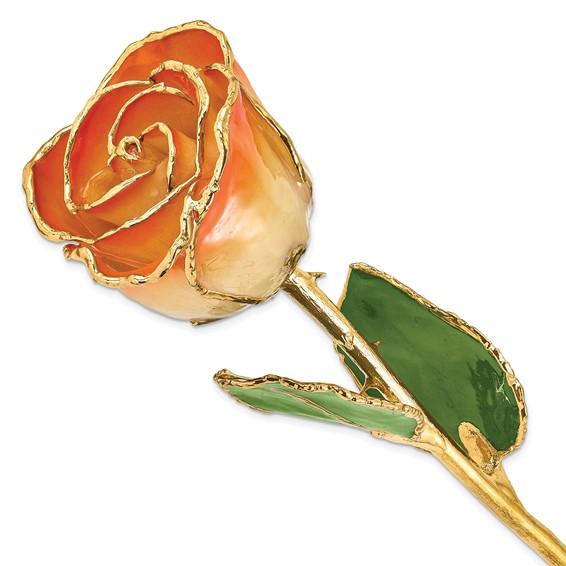 Lacquer Dipped Gold Trim White & Orange Rose