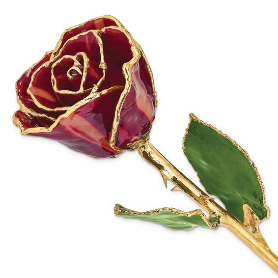 Lacquer Dipped Gold Trim Abracadabra Rose
